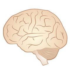 Brain symbol vector