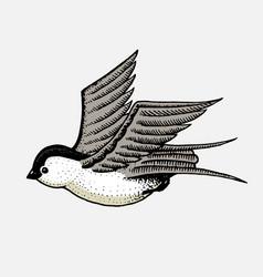 wild bird swallow symbol freedom fashion vector image