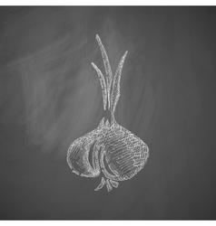 Onion icon vector