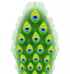 Peacock feathers illustration vector