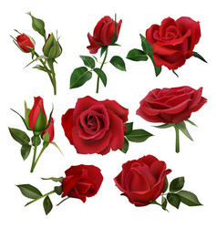 realistic decorative roses bouquet floral red vector image