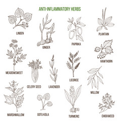 Anti-inflammatory herbs hand drawn set of vector