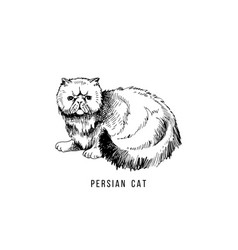 Hand drawn persian cat vector
