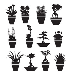 pot plants garden flowers and herbs vector image