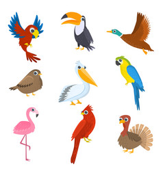 Set of various wild domestic tropical waterfowl vector