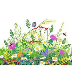 summer meadow plants and insects vector image