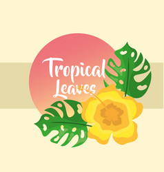 tropical leaves round banner monstera palm vector image
