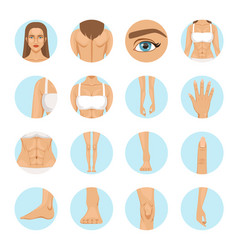 Woman body parts human anatomy vector