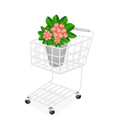 Fresh Crown of Thorns in A Shopping Cart vector image vector image