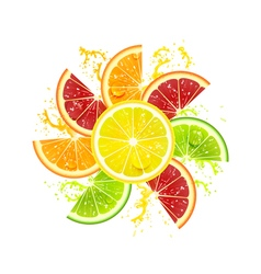 Citrus Fruits in the Form of a Flower vector