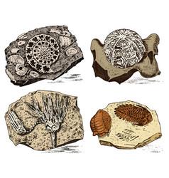 Fragment fossils skeleton of prehistoric dead vector
