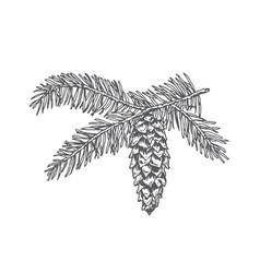 Hand drawn christmas fir needle pine twig vector