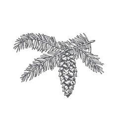 hand drawn christmas fir needle pine twig with vector image