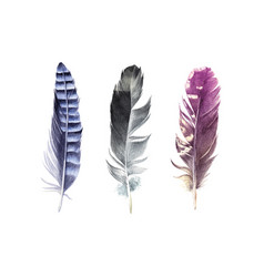 hand drawn watercolor feather set vector image