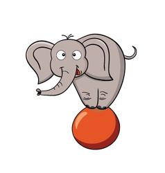 Cartoon elephant on a ball vector image vector image