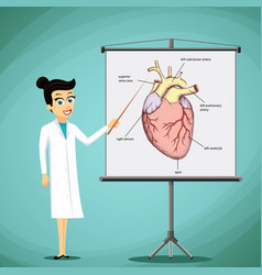 Doctor shows on a blackboard image with a human vector