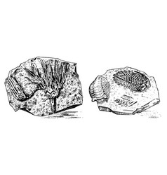 fragment fossils skeleton of prehistoric dead vector image