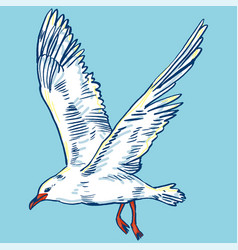Gull flight bird and seabird sea isolated on vector