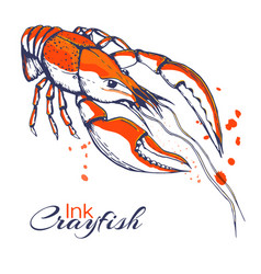 Ink hand drawn crayfish concept for decoration or vector