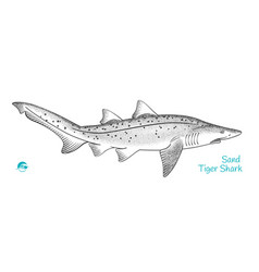 Sand tiger shark hand-drawn vector