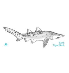 sand tiger shark hand-drawn vector image