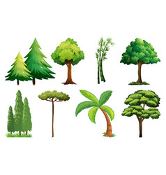 Set different tree vector