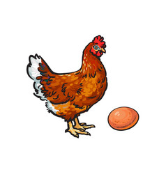 Sketch hand drawn chicken egg isolated vector