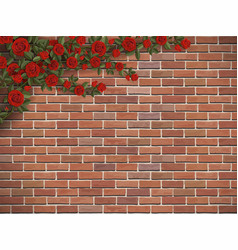 Climbing rose on a brick vector