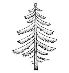 spruce vector image vector image