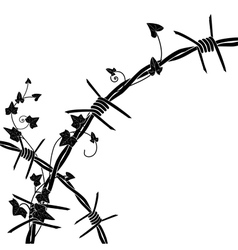 ivy with barbed wire vector image