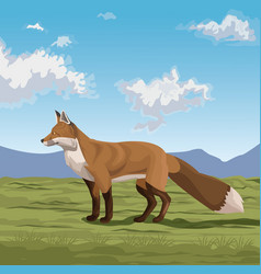fox on the nature vector image