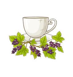Black currant tea vector