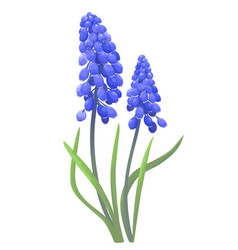 blue spring flowers vector image
