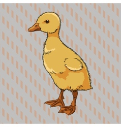 Realistic duckling side view vector