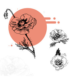 Sketch red poppies in circle vector
