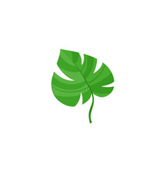 flat tropical monstera leaf summer icon vector image vector image