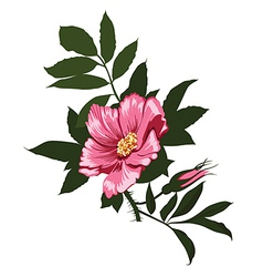 wild rose flower on a white background vector image vector image