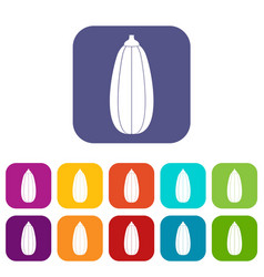 zucchini vegetable icons set vector image vector image