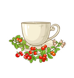 Cranberry tea vector
