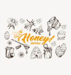Honey sketches set bee hive honey jar barrel vector