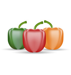 Set of three peppers yellow red and green pepper vector