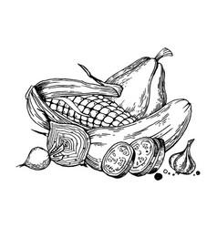 still life vegetable engraving vector image