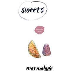 sweet marmalade watercolor vector image