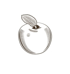 Apple in vintage style Line art vector image
