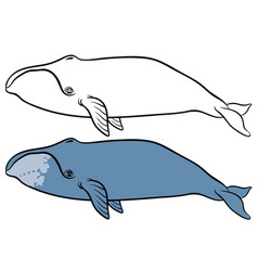 Bowhead or greenland whale vector