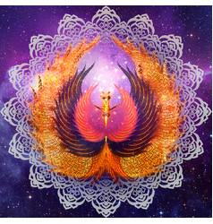phoenix mandala vector image