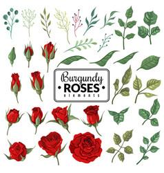 Red roses garden burgundy rose flowers floral vector