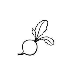 turnip hand drawn sketch icon vector image