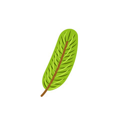 flat style fir tree twig branch christmas icon vector image
