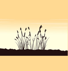 Beauty scenery with course grass silhouettes vector